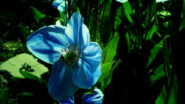 Тромсё. Голубые маки и странный Амундсен 14