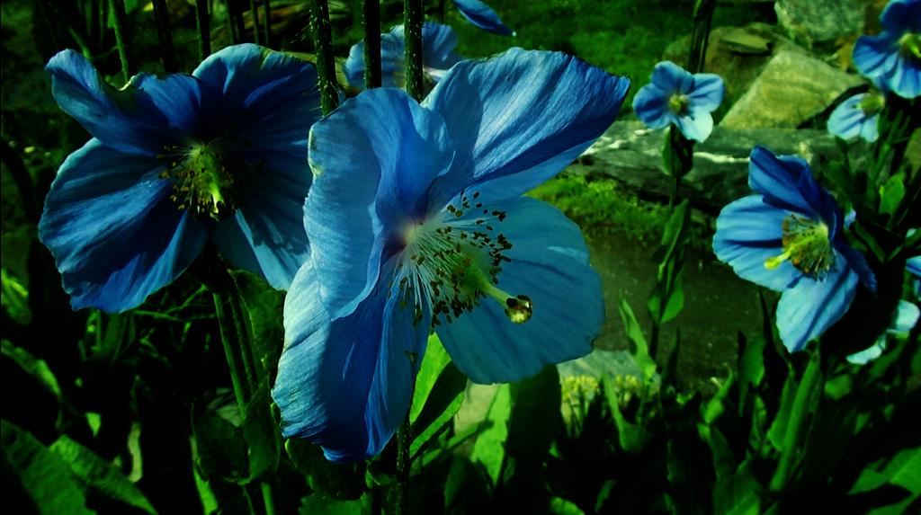 Тромсё. Голубые маки и странный Амундсен