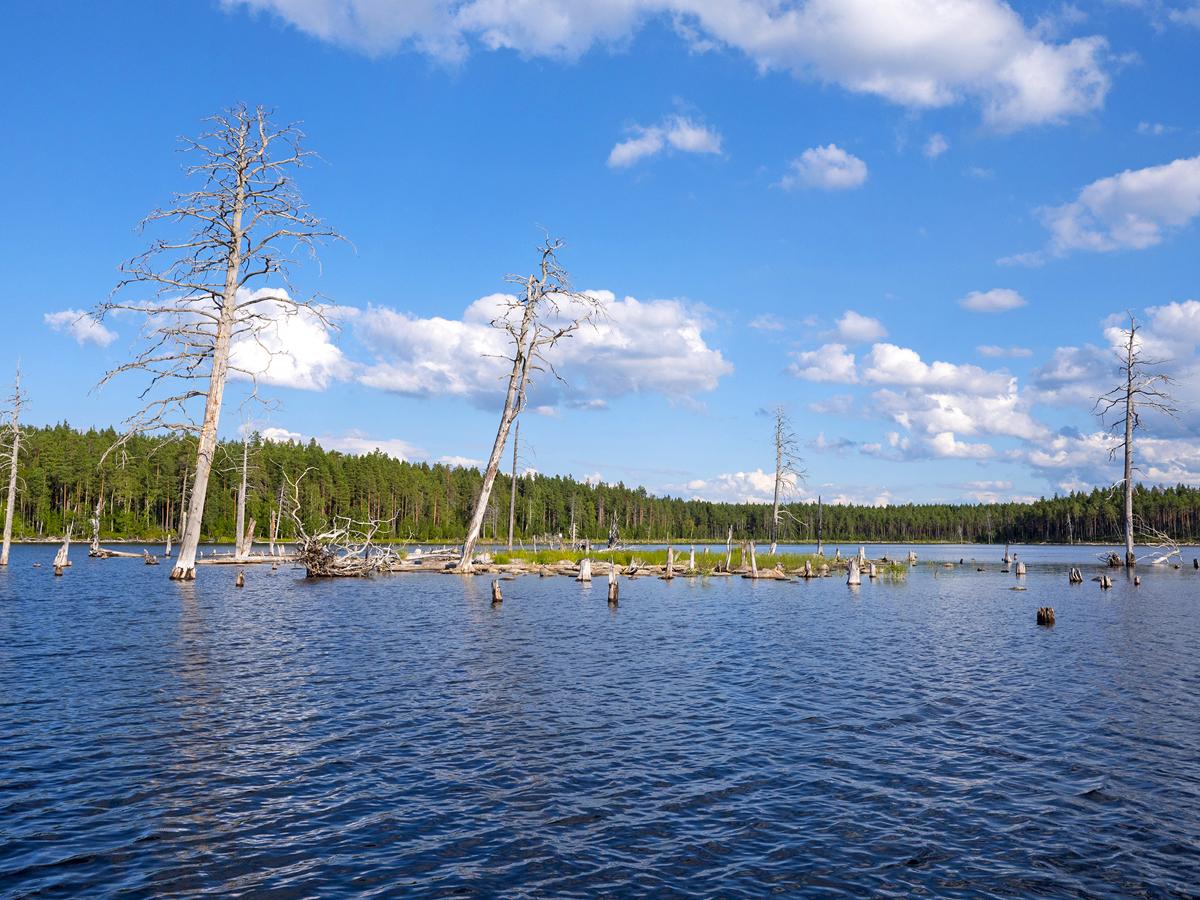 Северная Карелия Калевала озеро Среднее Куйтто 01