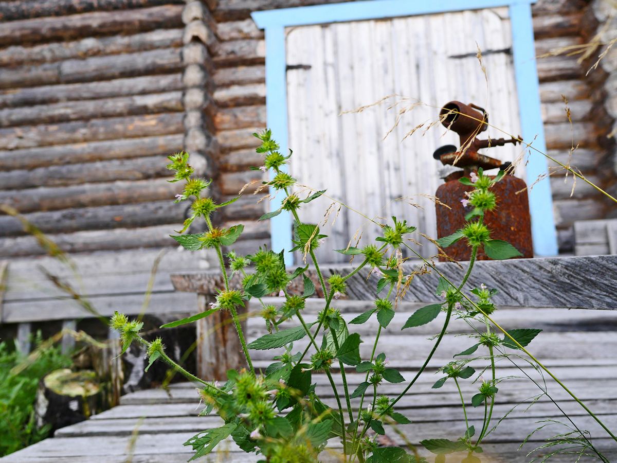 Экскурсия в деревню Хайколя — этнографическая экскурсия летом 024