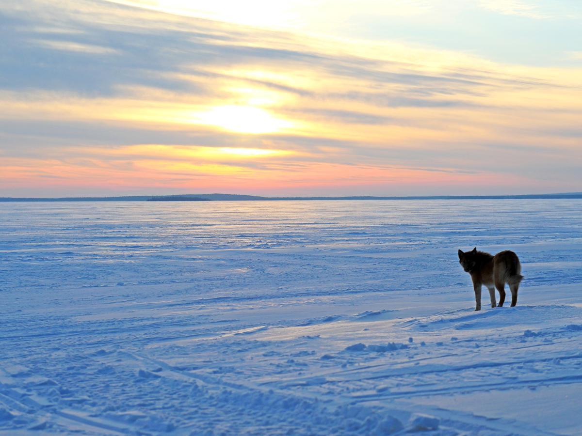 Снегоходы в Северной Карелии 08