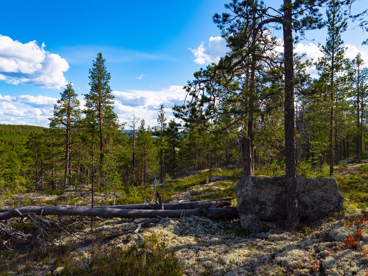 Venehjärvi место, где хочется умереть или вновь родиться 022