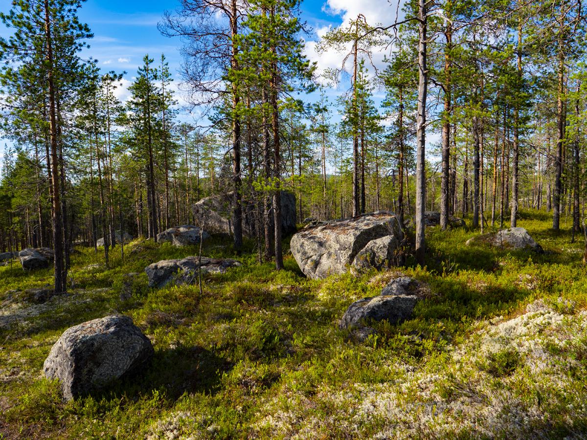 Venehjärvi место, где хочется умереть или вновь родиться 026