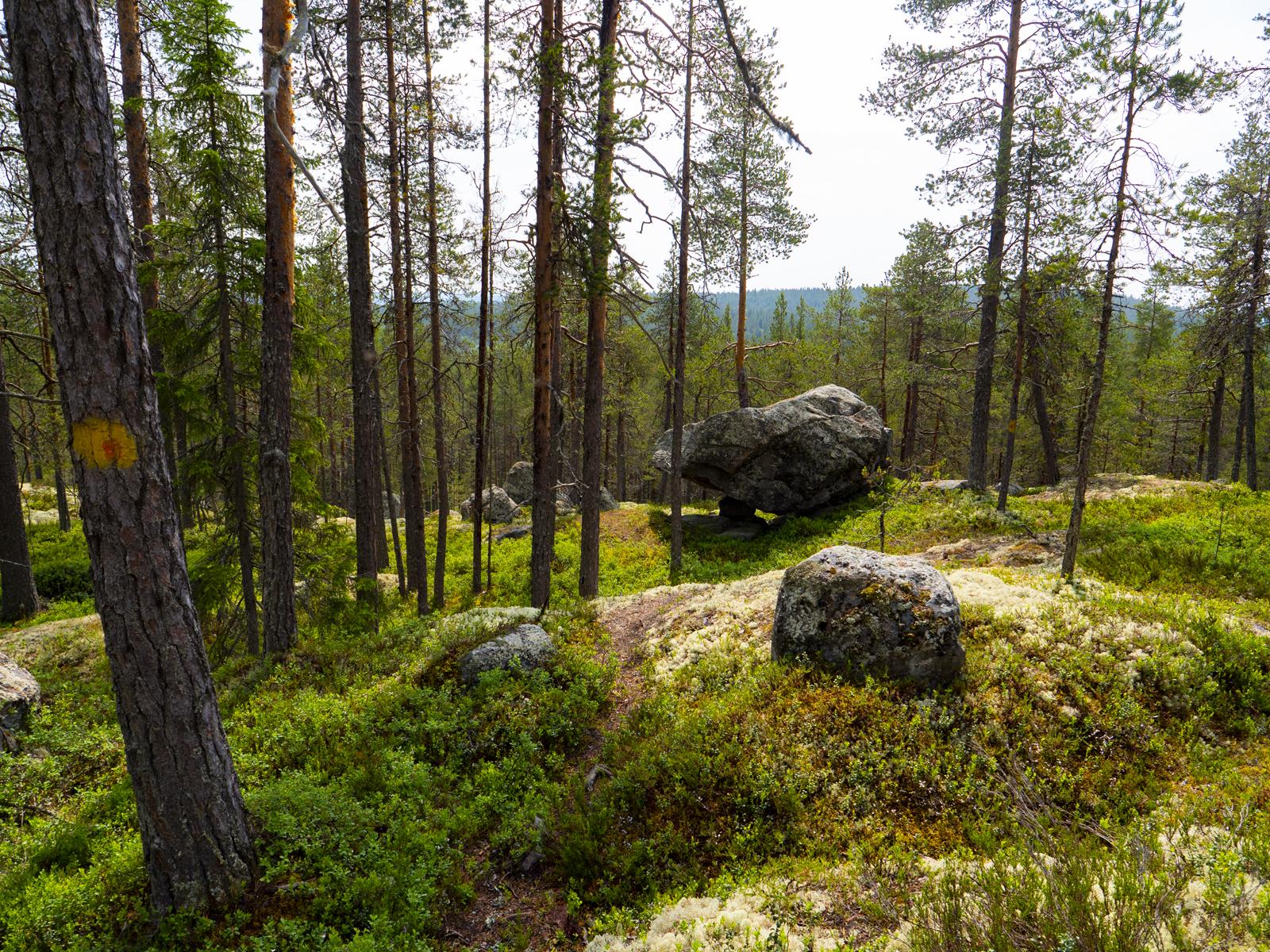 Другой мир, шаманы и дикая природа 48 часов магии Северной Карелии 024