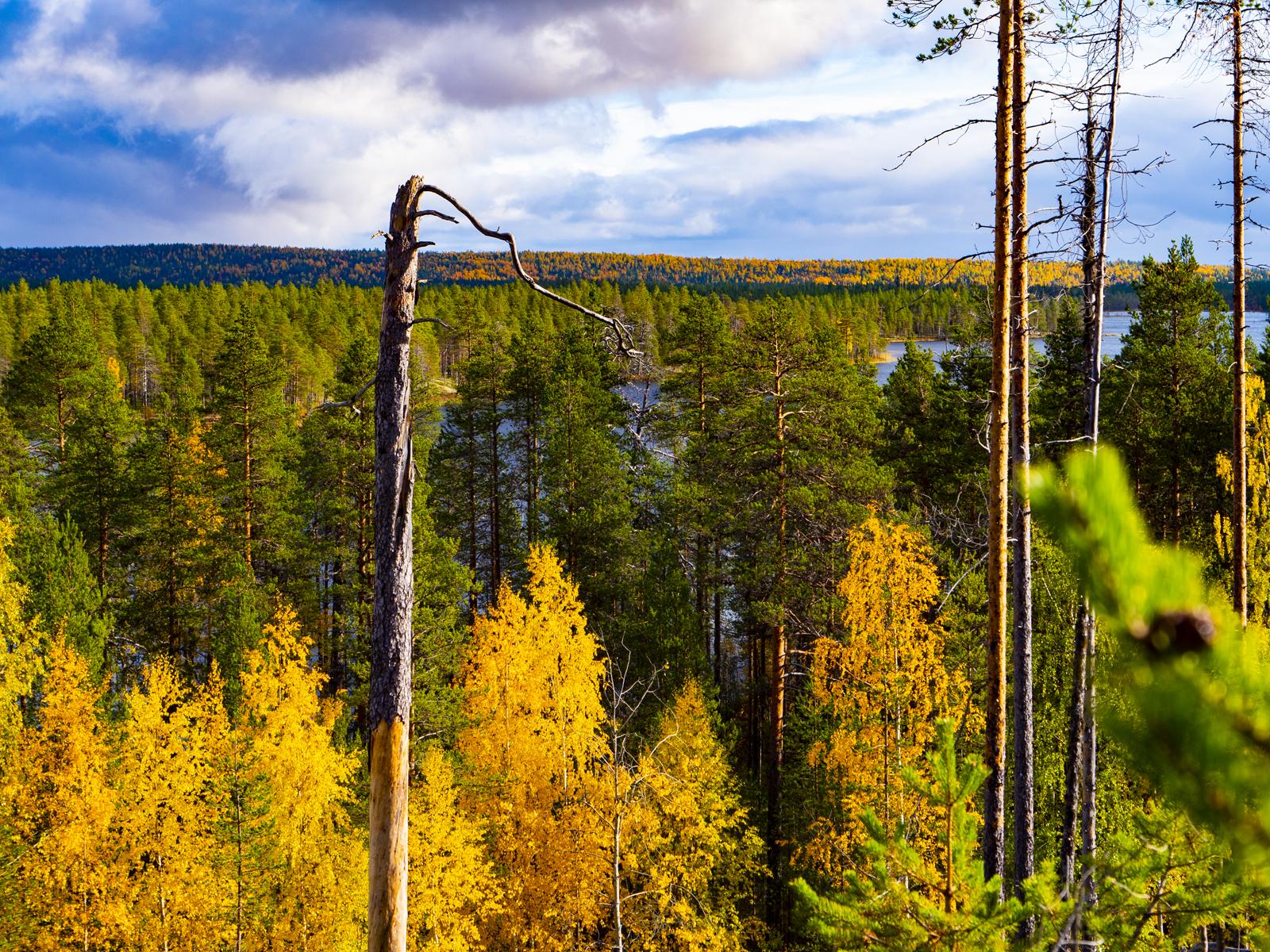 Осень в Северной Карелии